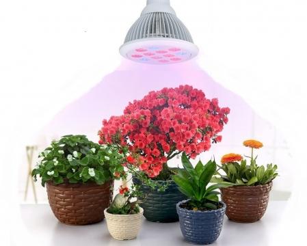 Best Artificial Grow Lights for Indoor Plants Picture